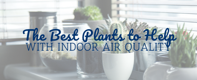The Best Plants to Help With Indoor Air Quality